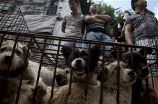 dog-meat-to-stop